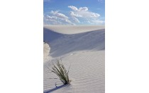 The White Sands of New Mexico