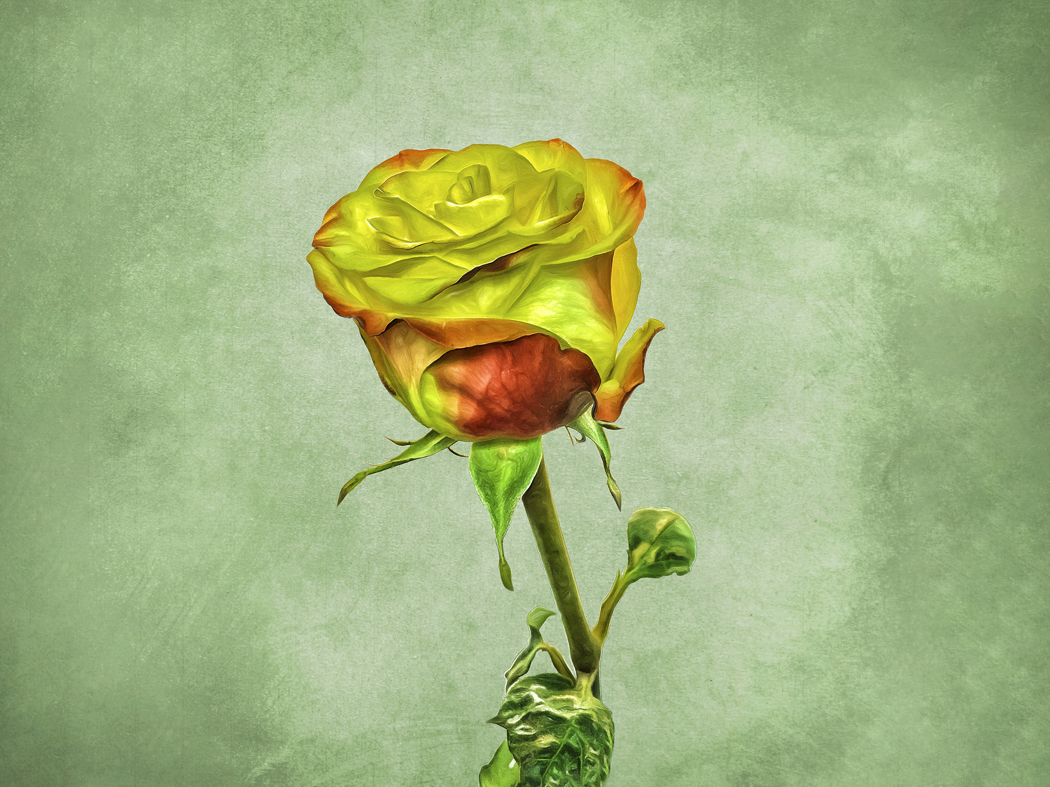 A Rose Is A Rose…