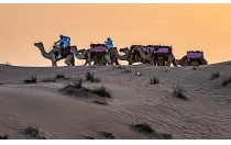 Camel Caravan Sunset