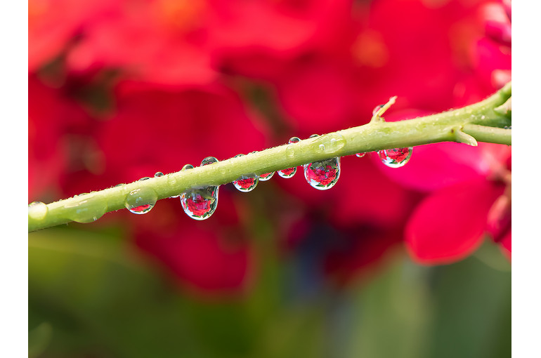 Detailed Drops